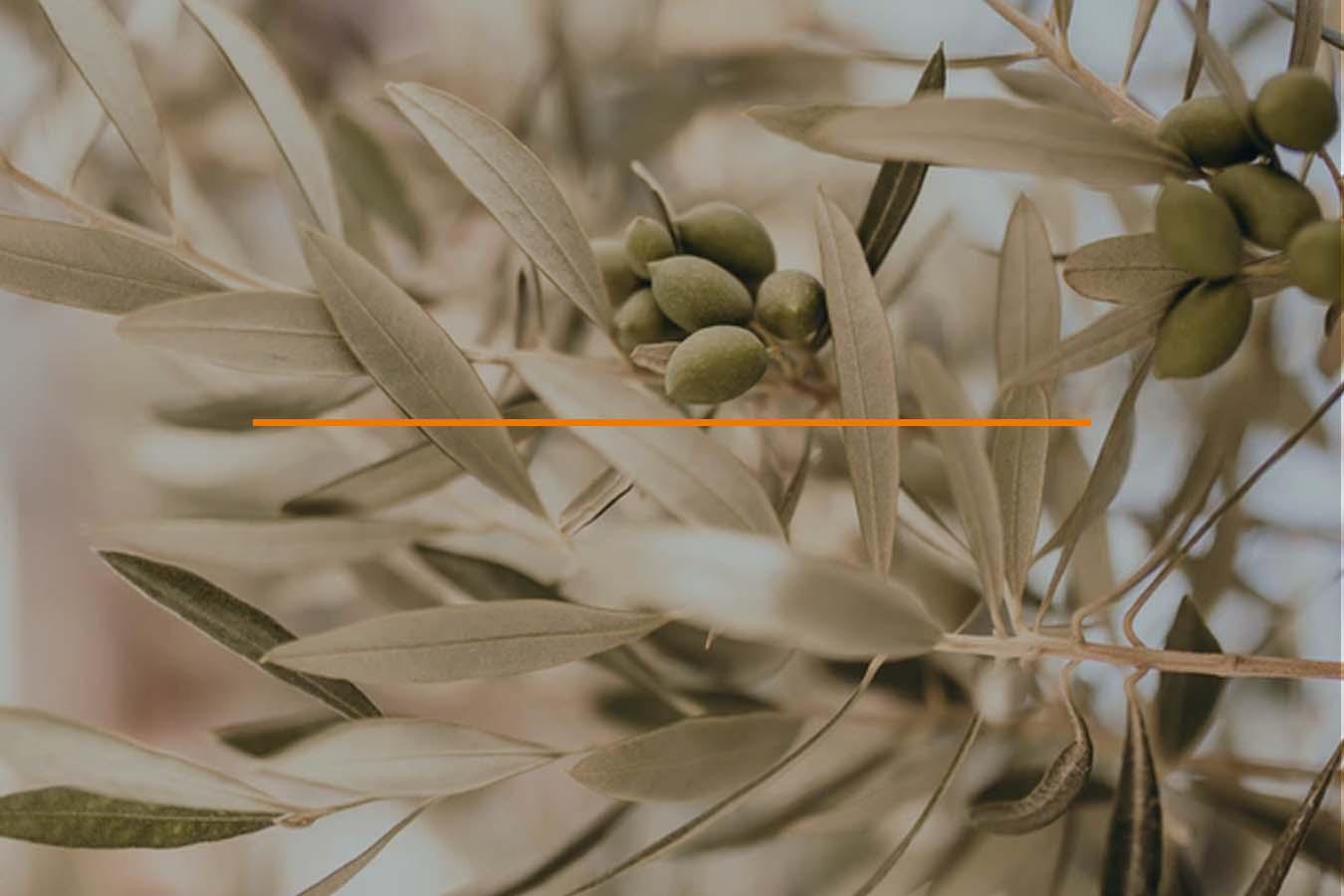 Créditos referentes Agroalimentarios